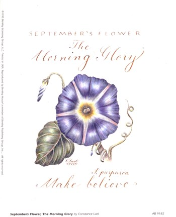 Framed September's Flower, Morning Glory Print