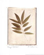 Bay Leaves Art