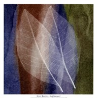 Leaf Structure I