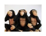 Monkeys - See No Evil, Hear No Evil, Speak No Evil  Fine Art Print