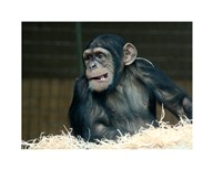 Funny Monkey  Fine Art Print