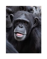 Funny face monkey  Fine Art Print
