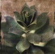 Succulent I Art