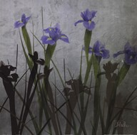 Blue Irises I Art