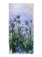 Purple Irises, 1914-17 Art