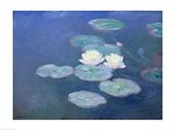 Waterlilies, Evening  Fine Art Print