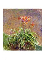Hemerocallis, 1914-17 Art