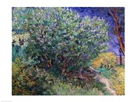 Lilac Bush, 1889