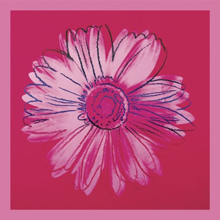 Framed Daisy, c. 1982 (crimson and pink) Print