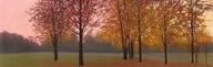 Autumn Dawn, Maples  Fine Art Print