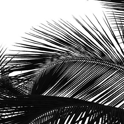 Framed Palms 13 (detail) Print
