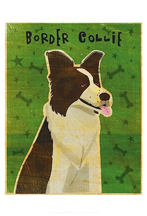 Framed Border Collie Print