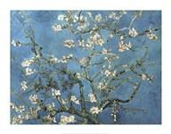 Almond Blossom, 1890 Art