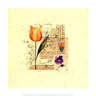 Flower Notes with Orange Tulip