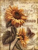 Beauty in Bloom III  Fine Art Print