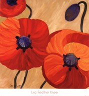 Oriental Poppy L