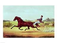 The Celebrated Horse  Fine Art Print