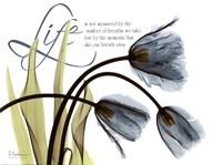 Mineral Blue Tulips...Life  Fine Art Print