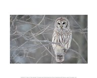 Owl In The Woods  Fine Art Print