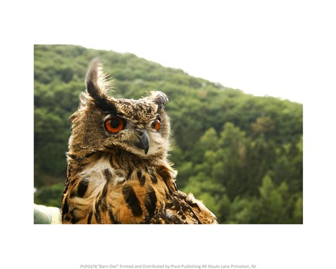 Framed Barn Owl Great Horned Owl Print