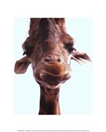 Giraffe Face  Fine Art Print