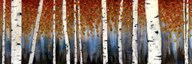 Birch Haven  Fine Art Print