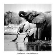 Namibia Elephants  Fine Art Print