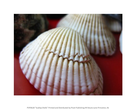 Framed Scallop Shells Print