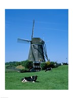 Windmill and Cows, Wilsveen, Netherlands