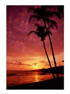 Silhouette of palm trees at sunset, Kauai, Hawaii, USA Art