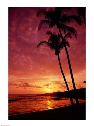 Framed Silhouette of palm trees at sunset, Kauai, Hawaii, USA Print
