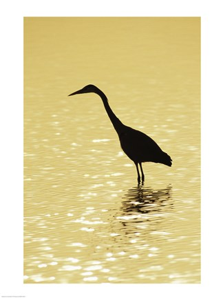 Framed Great Egret in the water Print
