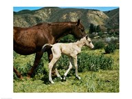 A Palomino Mare and a Colt