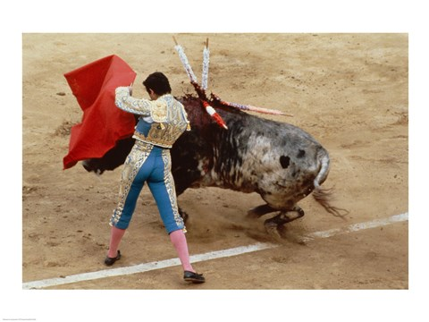 Framed Matador fighting a bull, Plaza de Toros, Ronda, Spain Print