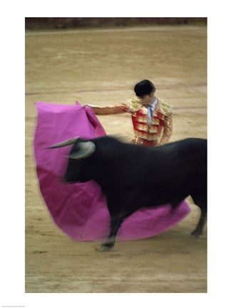 Framed matador and a bull at a Bullfight, Spain Print