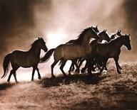 Wild Horses Art