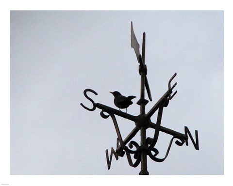 Framed Weathervane on the McKee Clock, Bangor Print