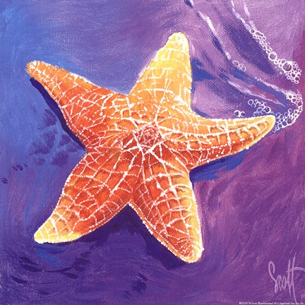 Starfish Fine Art Print By Scott Westmoreland At