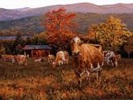 Autumn's Gold  Fine Art Print