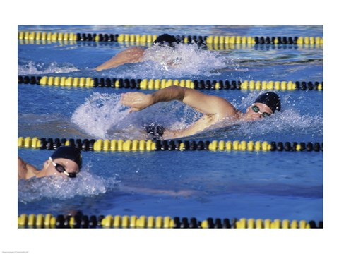 Framed Three swimmers racing in a swimming pool Print