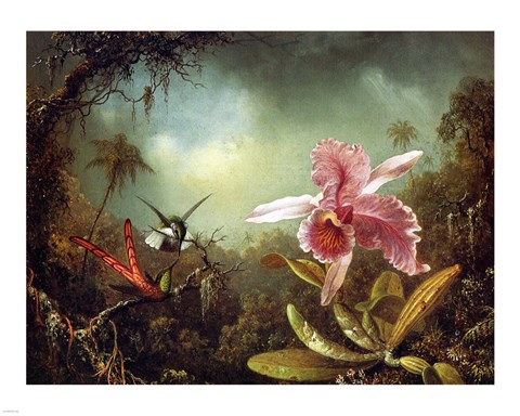 Framed Orchid with Two Hummingbirds 1871 Print