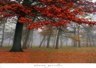 Autumn Mist I  Fine Art Print