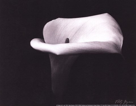 Framed Calla Lilly III - mini Print