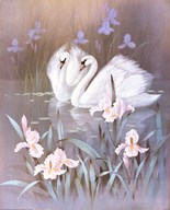 Swans With Waterlilies  Fine Art Print