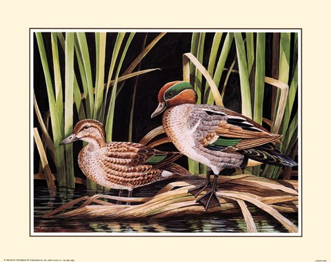 Framed Ducks Print