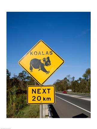 Framed Koala sign on the road, Queensland, Australia Print