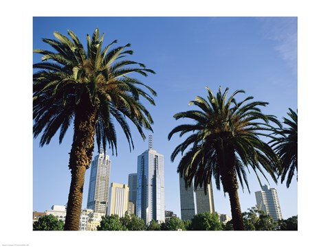 Framed Palm trees in a city, Melbourne, Australia Print