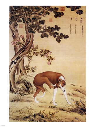 Framed Ten Prized Dogs Chinese Greyhound Print