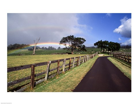 Framed Rainbow over pineapple fields, Makawao, Maui, Hawaii, USA Print