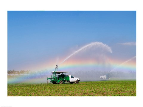Framed Rainbow seen under the spray from sprinkler in a vegetable field, Florida, USA Print